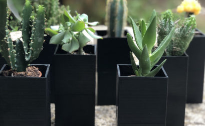 Maison & Jardin magazine, l'arrosage automatique des plantes d'intérieur