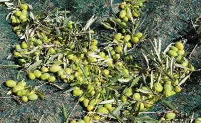 Maison & Jardin magazine goute l'huile d'olive du Moulin de Castelas
