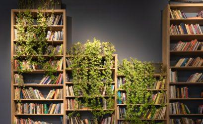 Maison 1Jardin magazine vous donne des conseils pour installer chez vous un mur végétal