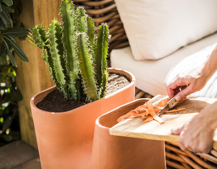Le pot de fleurs composteur Transfarmers accueil également les cactus