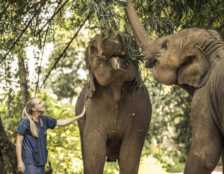 Une rencontre avec les éléphants à l'hôtel Anantara Golden Triangle Elephant Camp & Resort