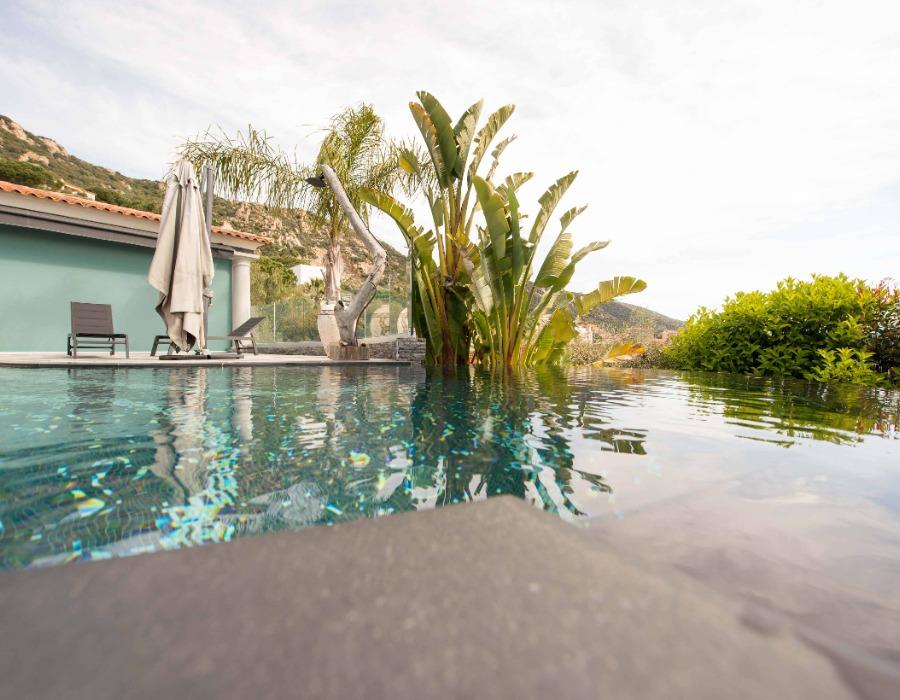 vue d'une piscine avec ses palmiers architecture et design