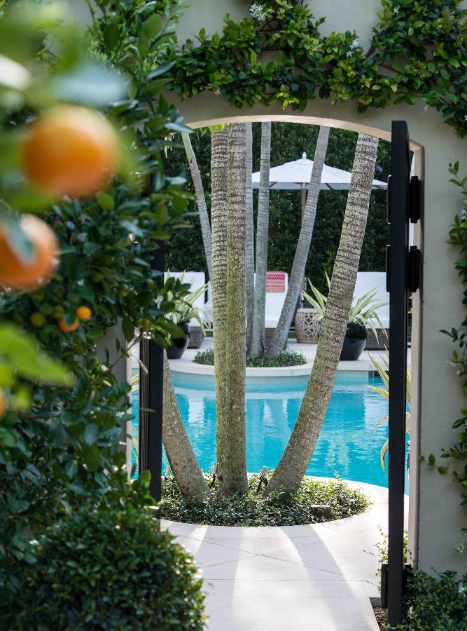 agence de design, coin piscine avec palmiers
